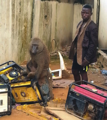 See the man who uses snakes and monkeys for robbery in Lagos (Photo)