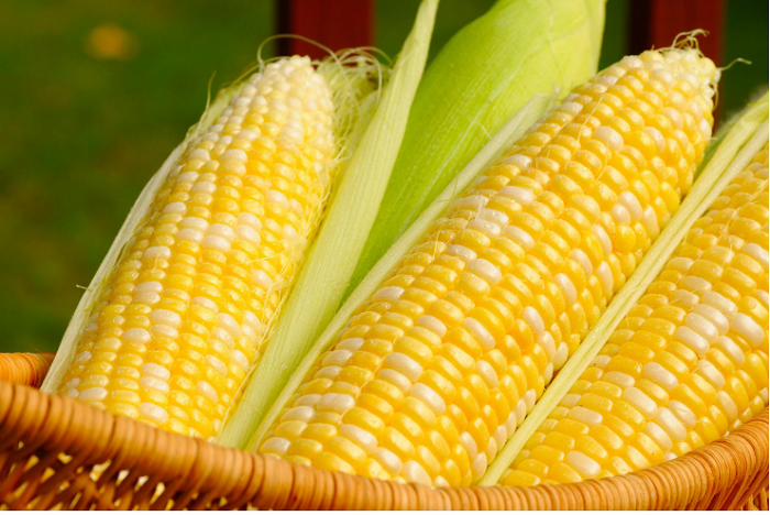 Why you should add corn to your diet