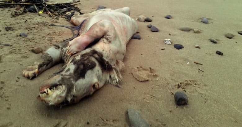 The 15 Creepiest Things That Have Washed Up On Shore [+Photos]