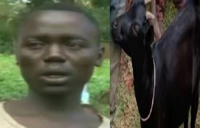 kenyan-man-caught-having-sex-with-neigbours-goat-theinfong