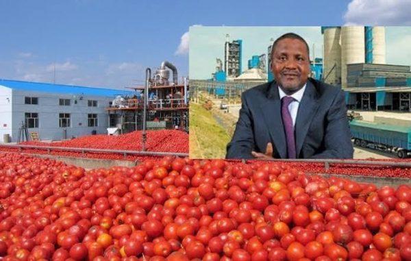 Dangote's tomato processing factory shuts down