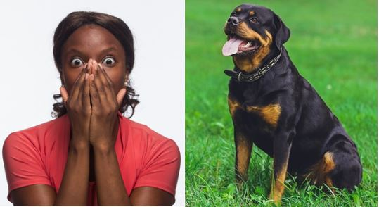 """""""I slept with a dog once for N3million, now I get wet whenever I see dogs""""- Nigerian lady reveals (Screenshot)"""