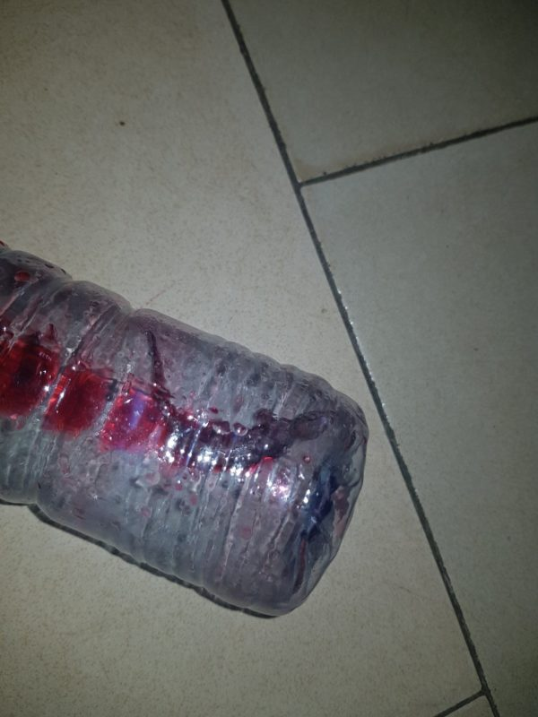 Lady finds 'Wall Gecko' in her bottle after drinking Zobo from it (Photos)