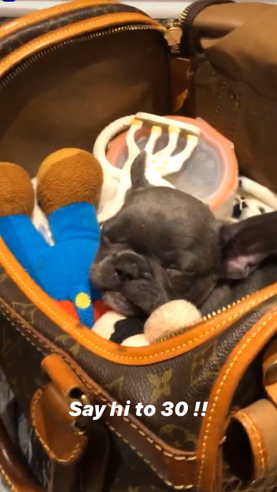 Davido gets a new pet dog in Canada, names her 30BG (Photos)