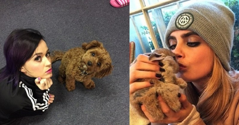 Celebrity-Pets-TheinfoNG